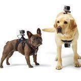 Fetch, un harnais pour fixer sa GoPro sur son chien et filmer toutes ses folles aventures