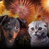 14 juillet : gare aux feux d'artifice avec vos animaux !