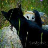 Le chat et la chouette qui s'aiment d'amour tendre : des images incroyables !