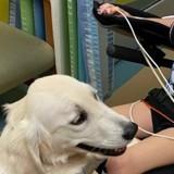Fillette paralysée après un accident de voiture : un chien s'approche et tout le monde retient son souffle
