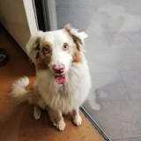 Perdu dans le RER A, ce chien a été retrouvé par ses maîtres !