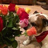 Elle reçoit des fleurs, pense que son mari lui fait une surprise mais ce n'est pas du tout ça