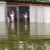 Ouragan Florence : 6 chiens enfermés dans une cage se seraient noyés en une heure si cet homme n'était pas intervenu