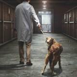 « La peine de mort n'existe plus, sauf pour les innocents » : la campagne choc de 30 Millions d'Amis contre l'euthanasie