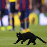 Un chat noir au milieu d'un match de foot fait trembler les plus superstitieux