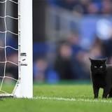 Un chat interrompt un match de foot et refuse obstinément de quitter le terrain (Vidéo)