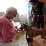 Menacés de mort, des chiens errants deviennent des chiens de thérapie en Roumanie