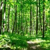 Elle entend des gémissements en forêt : en regardant au sol, elle voit la terre bouger et hurle