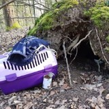 Les bénévoles du refuge entendent un chaton dans la forêt : depuis, deux questions les empêchent de dormir !
