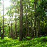 Un ouvrier aperçoit quelque chose dans la forêt : il comprend vite que c'est un vrai miracle