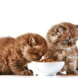Comment offrir une alimentation équilibrée à son chaton