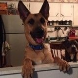 Un chien réchappe à l'euthanasie… grâce à un test ADN !