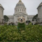 Un Chihuahua devient maire de San Francisco le temps d'une journée !