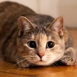4 astuces pour ajouter du fun aux repas de votre chat