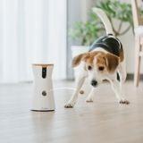 4 objets connectés utiles à offrir à votre chien