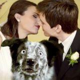 Fur, le chien qui veut être sur les photos de mariage ! (Vidéo du jour)