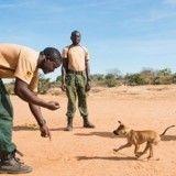 Un chiot errant adopté et formé pour sauver les éléphants d'Afrique