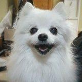 Gabe, le célèbre chien chanteur, est décédé
