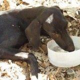 Déshydraté et abandonné, ce chien a la chance de retrouver une famille