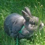 Héros d'un livre pour enfants, Galipette le lapin voyageur a besoin de vous !