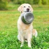 La gamelle de voyage : l'astuce pratique pour nourrir son chien en balade !