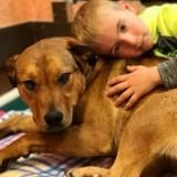 Un enfant de 6 ans a sauvé plus de 1 000 chiens de l'euthanasie !