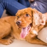 Les différentes solutions pour faire garder son chien