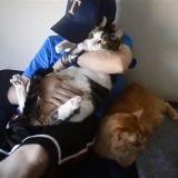 Cet homme doit se battre pour garder ses chats de thérapie