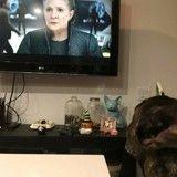 Le chien de Carrie Fisher a regardé la nouvelle bande-annonce de Star Wars 8, et c'est bouleversant…