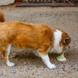 Gastrite du chien et du chat : causes, symptômes et traitement