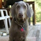 Son chien tué par un policier, il réclame 1,2 million d'euros de dommages et intérêts