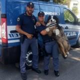 Viaduc de Gênes : le 1er à avoir sauvé des vies, c'est un chien !
