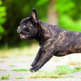 Comment la génétique influence la santé de mon chien ?