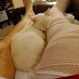 Sauvé de la mort, ce chaton rend aujourd'hui la pareille à son humain