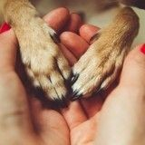 Découvrez pourquoi les chiens sont si gentils !