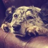 Giardiose du chien : comment éviter et traiter cette maladie très contagieuse ?