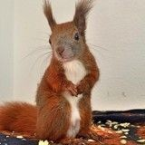 Gin, l'écureuil miraculé devenu star d'Instagram