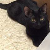 Un chat noir adopté depuis peu sauve in extremis la vie de son maître