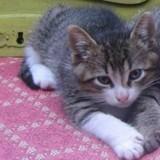 Les chroniques de Maître Terrin : Pour Glitter, Obama et Baguerra, 3 chatons morts dans d'atroces souffrances