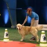 Ce chien perd un concours d'obéissance de la plus adorable des façons (Vidéo du jour)
