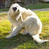 Au secours, mon chien se mutile !