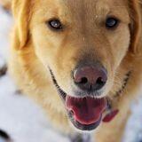 Andy, le chien héros qui a sauvé la vie de sa vieille voisine