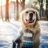 En pleine promenade, des chiens découvrent la neige… au goût de jambon !