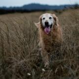 Danger dans les hautes herbes : il emmène son chien chez le vétérinaire, mais tout ne se passe pas comme prévu...