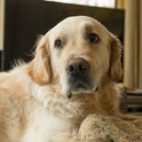 Ce chien inconnu vient tous les jours dormir chez elle, son histoire fait le tour du monde