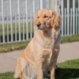 En pleine audience judiciaire, un chien intervient pour apporter du réconfort aux victimes