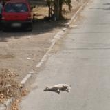 Un chien renversé par une voiture Google Street View ?