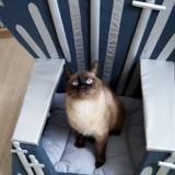 Game of Thrones : des trônes de fer pour chiens et chats