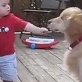 Quand un adorable petit garçon partage son goûter avec son ami chien (Vidéo du jour)