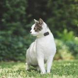 Que fait mon chat quand il s'en va ? La solution pour le savoir !